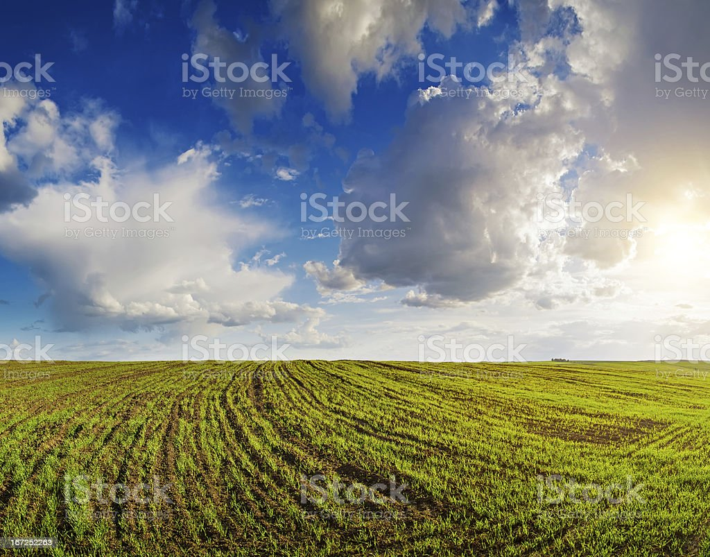 Cloudy sky above the field royalty-free stock photo