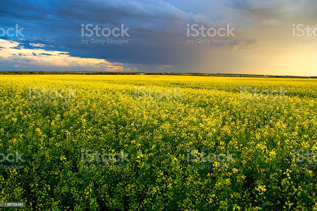 A cloudy sky covering a huge green field stock photo