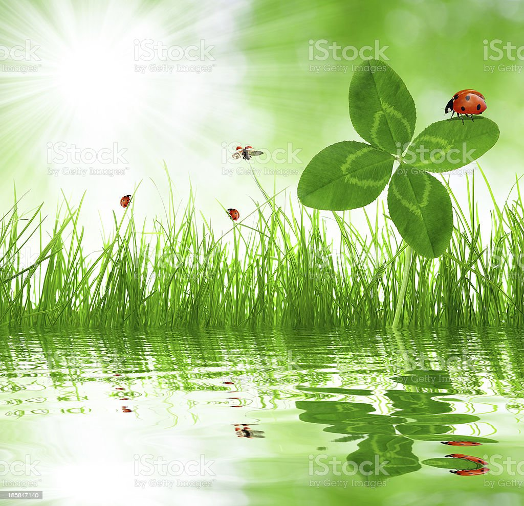 clover and ladybirds royalty-free stock photo