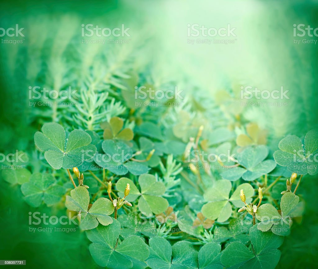 Clover And Little Yellow Flowers Stock Photo 538357731 Istock