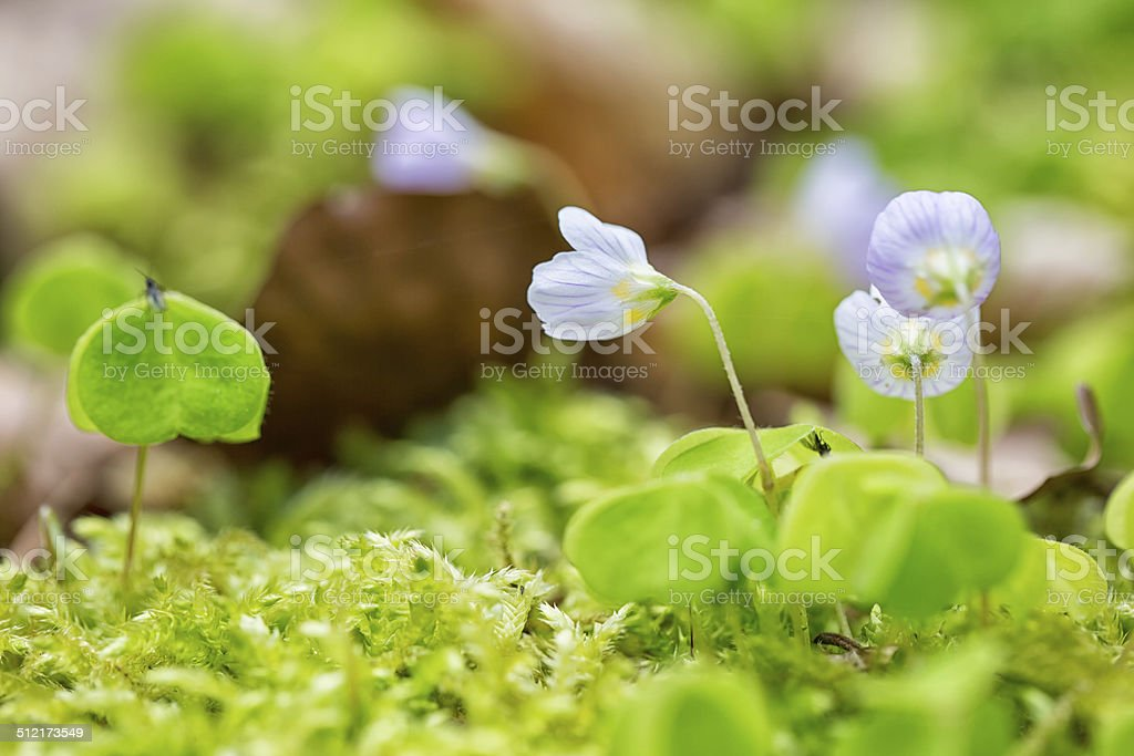 Clover and moss stock photo