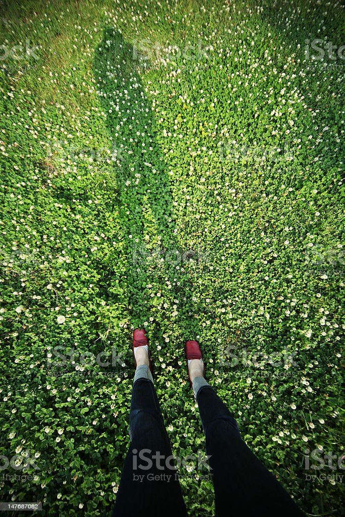 clover field royalty-free stock photo