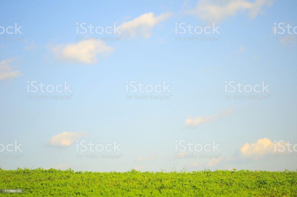Clover Field Scenic stock photo
