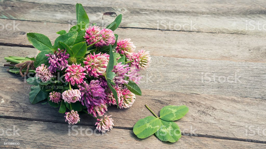 Clover flowers bouquet with leaves foto de stock royalty-free