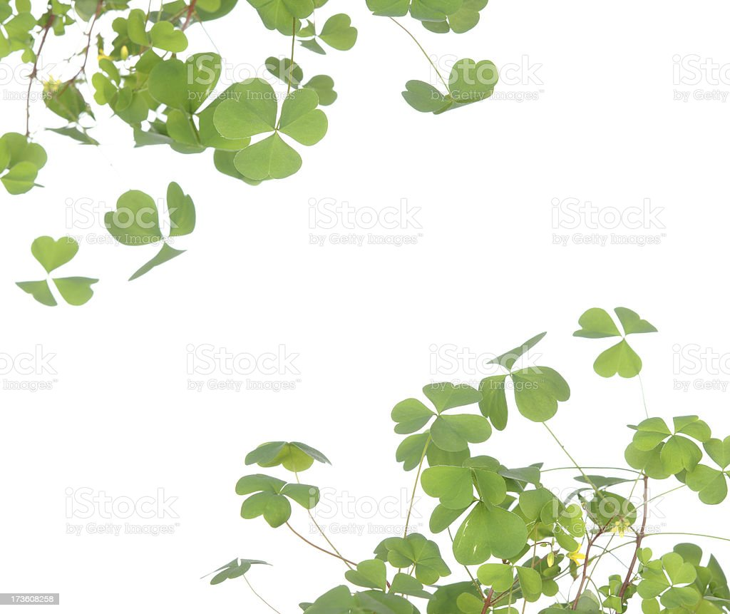 Clover Frame royalty-free stock photo