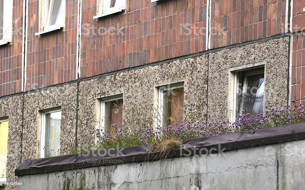 Clover Growing On Old Plattenbau royalty-free stock photo