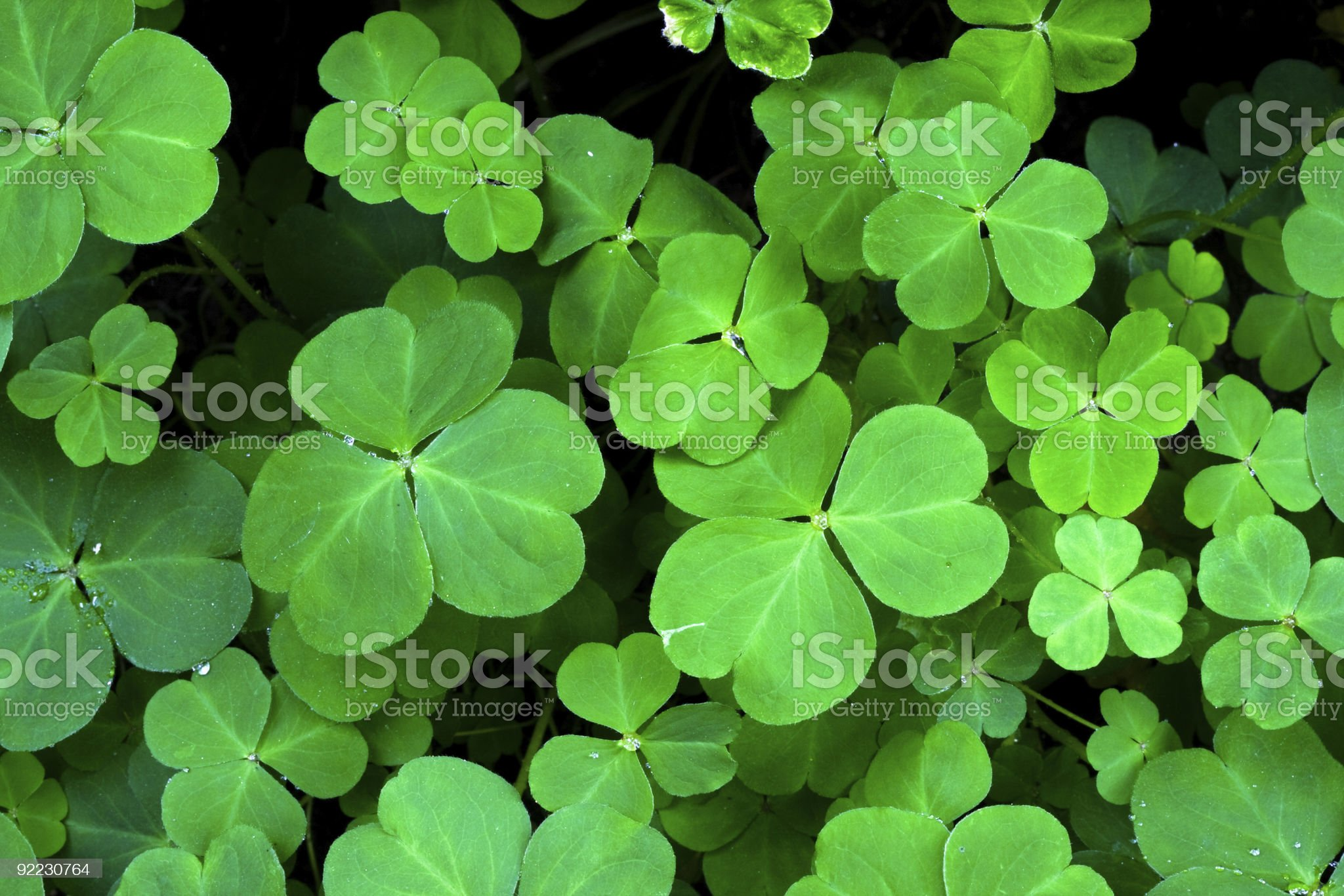clover leaf royalty-free stock photo