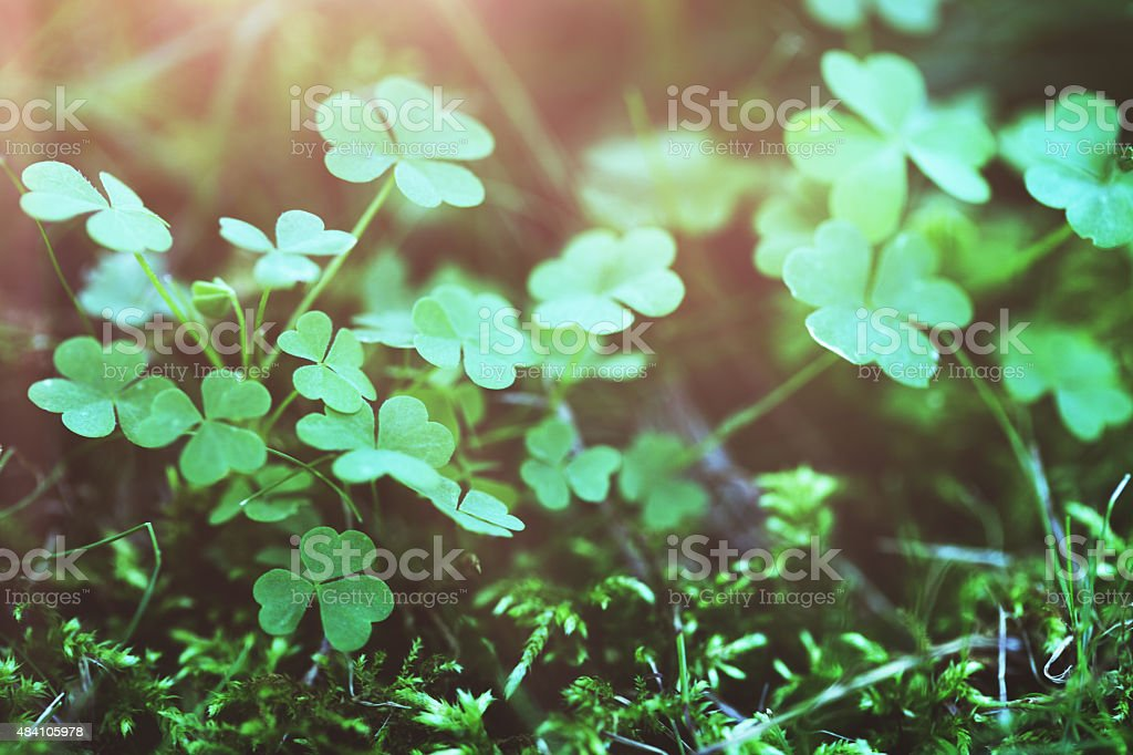 Clover on green stock photo