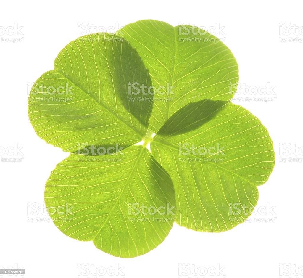 clover royalty-free stock photo