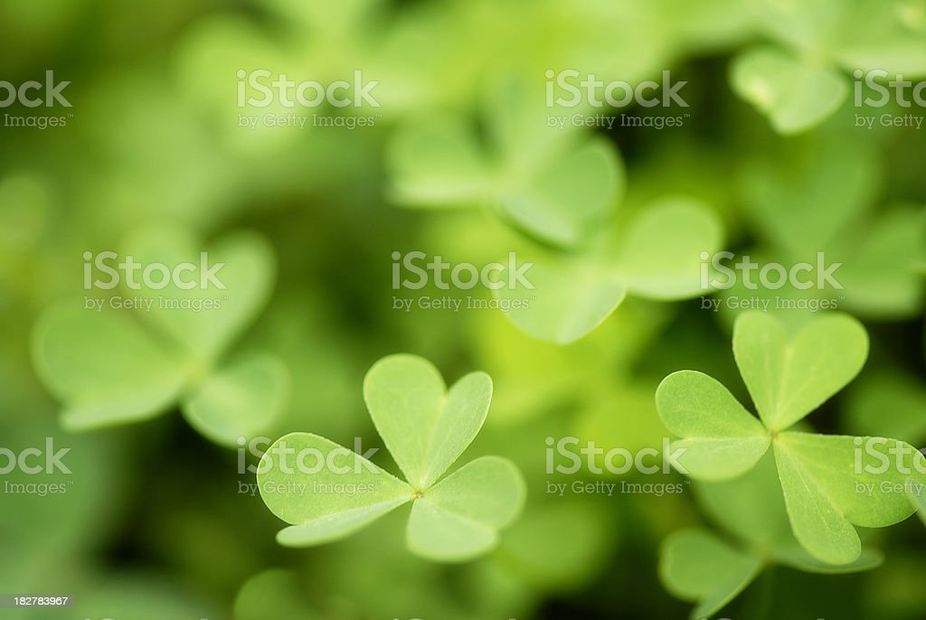 Clover royalty-free stock photo