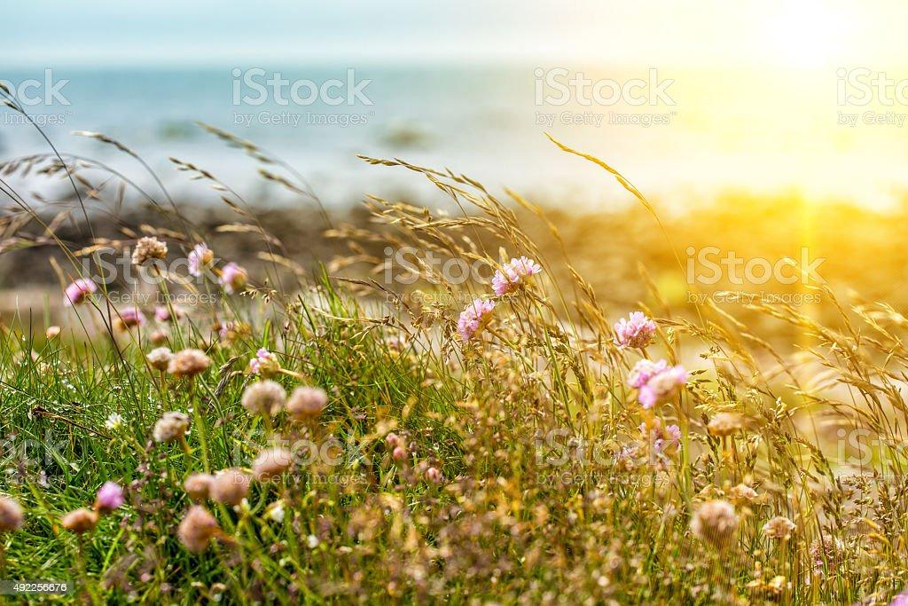 clover stock photo