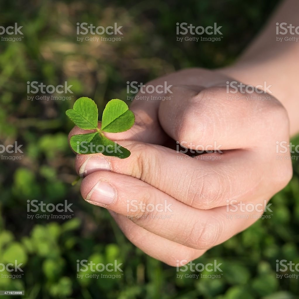 clover quatrefoil stock photo