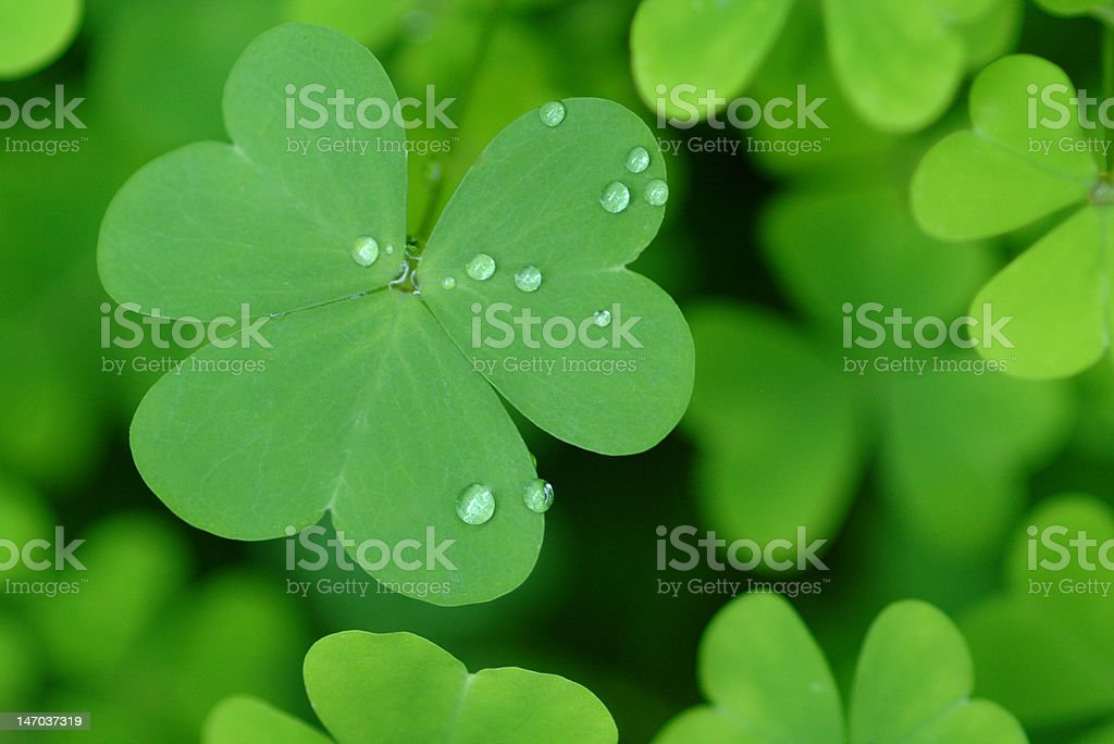 Clover St Patrick's Day green stock photo