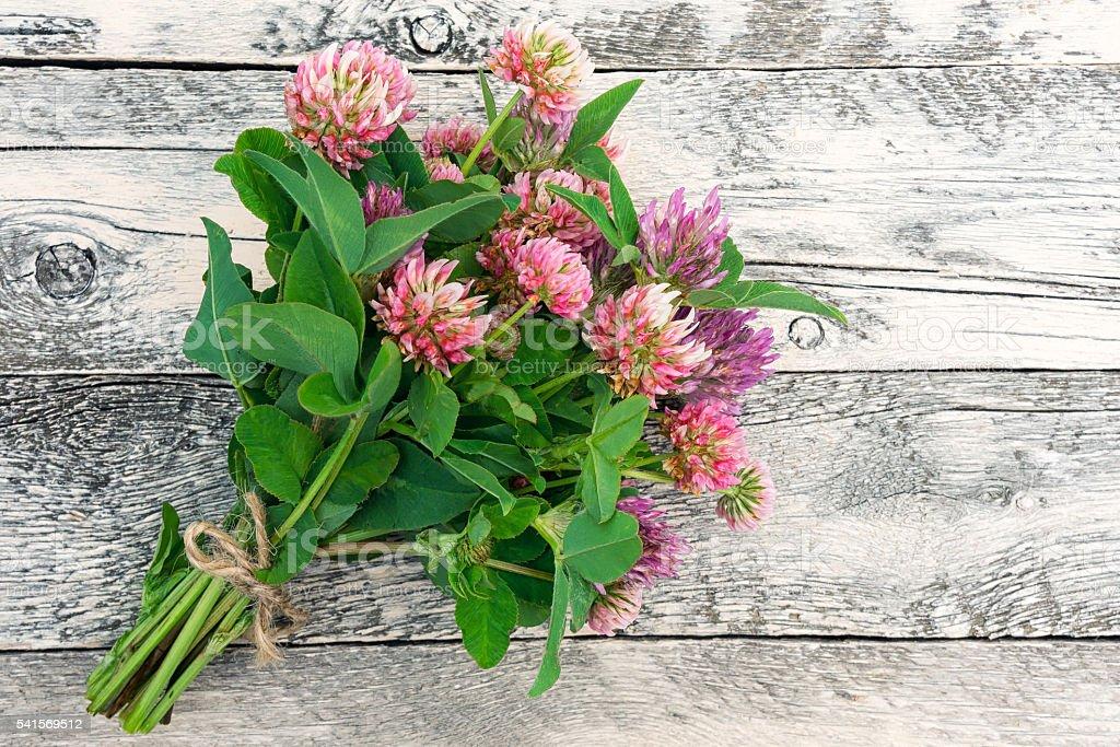 Clovers bouquet foto de stock royalty-free