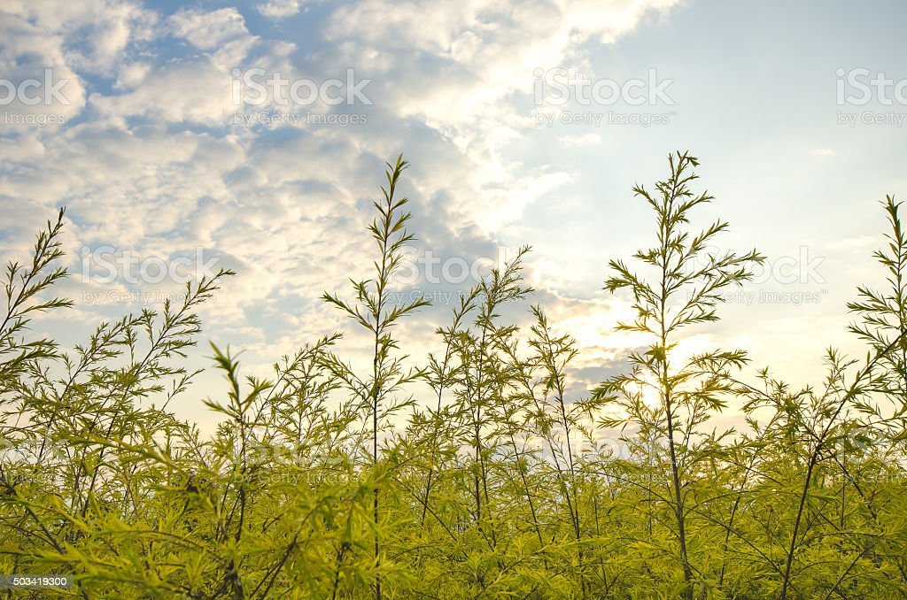 clump of grass stock photo