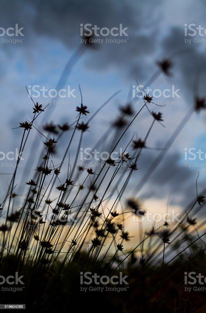 Clump of little grass stock photo