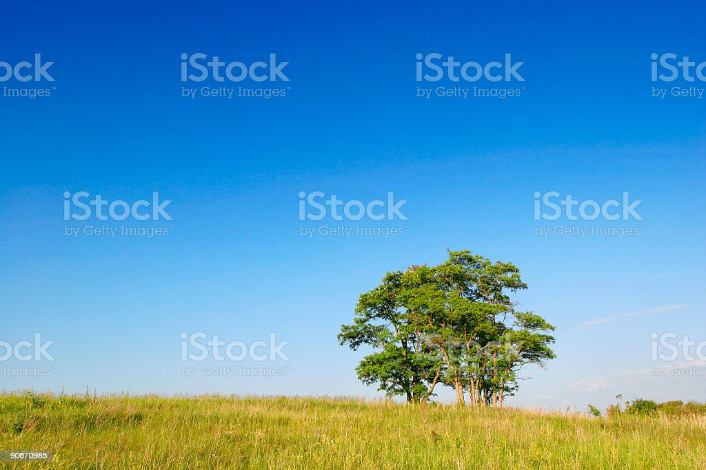 Clump of Trees royalty-free stock photo