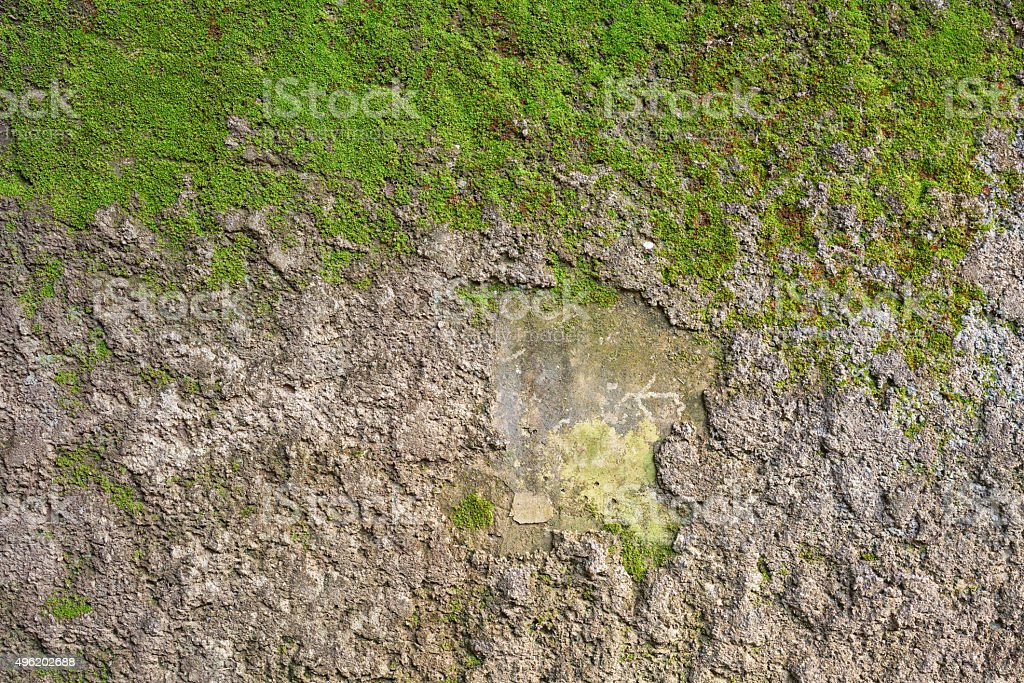clumps of moss on concrete wall royalty-free stock photo