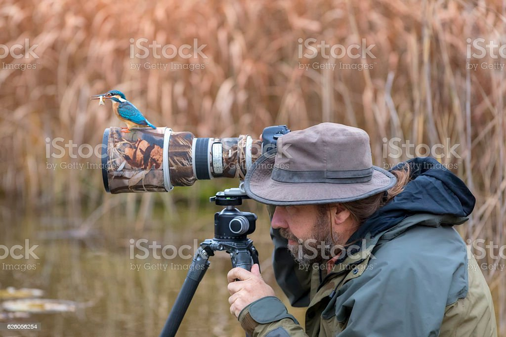 Clumsy nature photographer dont find the kingfisher on the lens stock photo