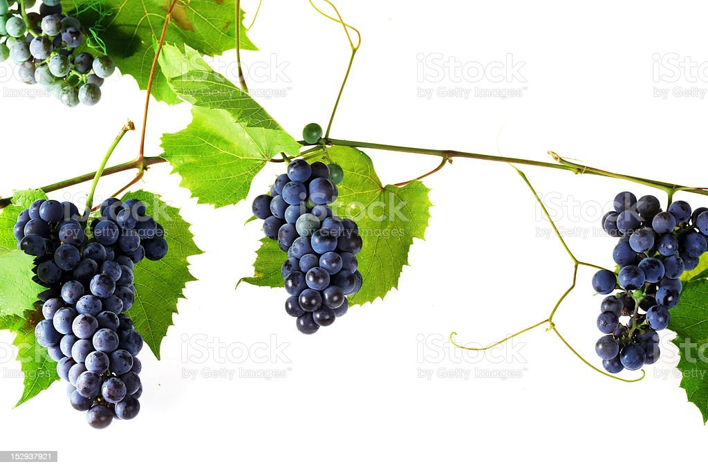cluster fresh grape royalty-free stock photo