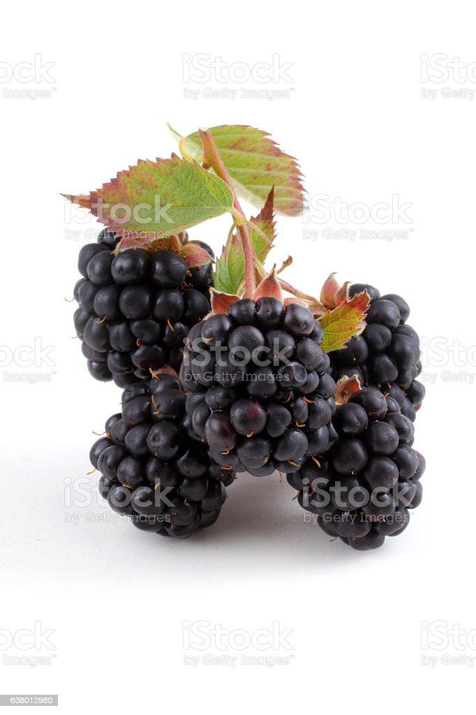 Cluster of blackberry stock photo