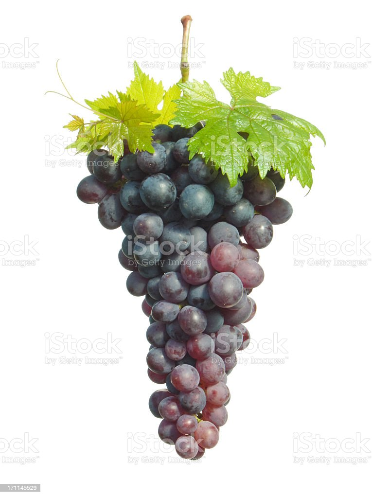 A cluster of ripe purple grapes on the vine isolated stock photo