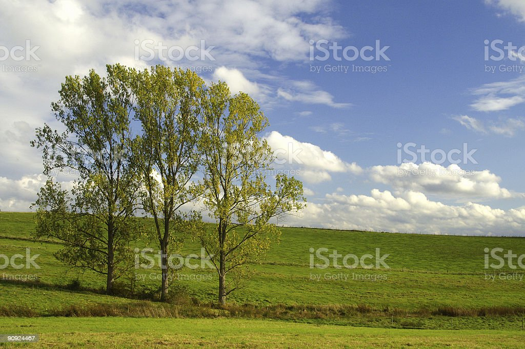 Cluster off trees in Autumn royalty-free stock photo