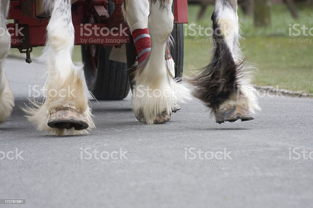 Clydesdale Horses Pulling A Dray royalty-free stock photo