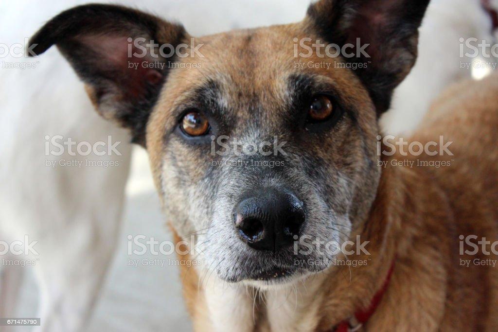 Cão de casa stock photo