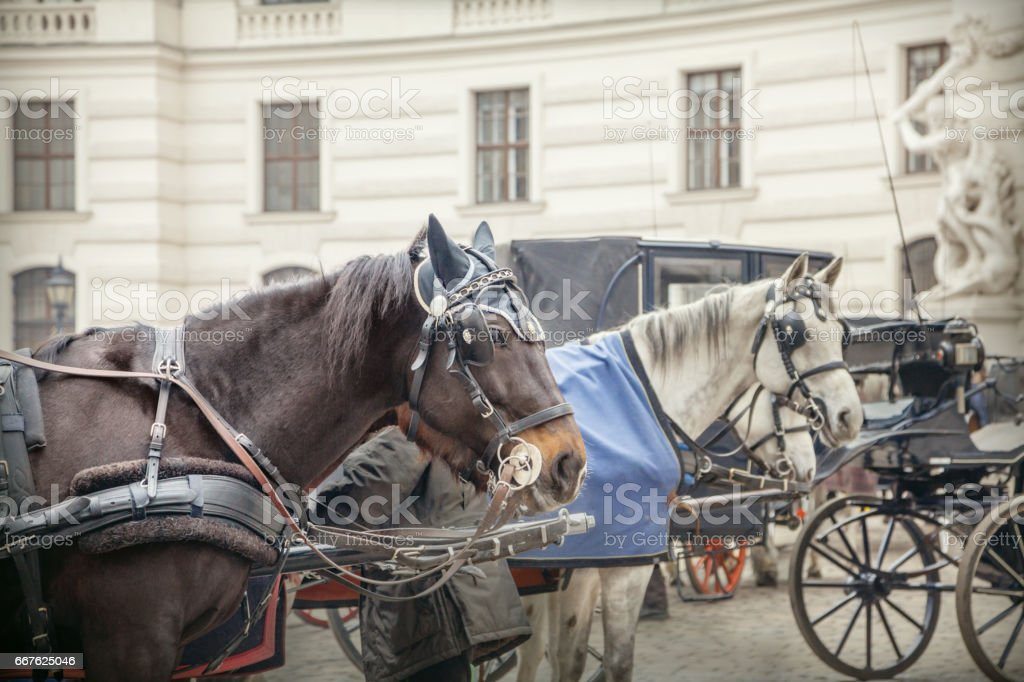 Coach in Vienna stock photo