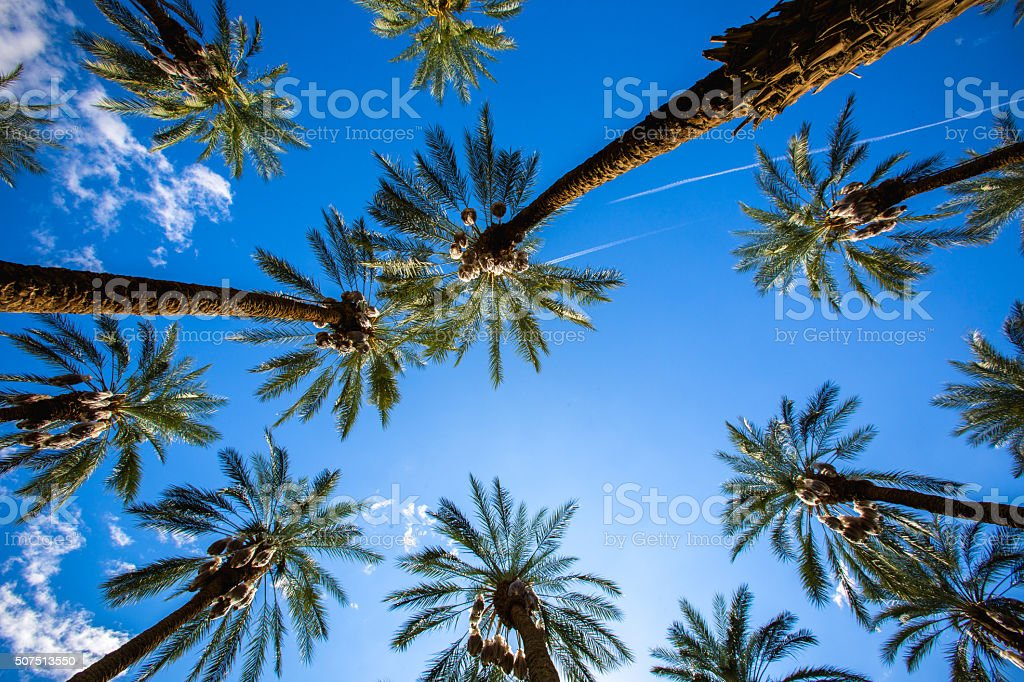Coachella Palm Trees and Clear Skies stock photo
