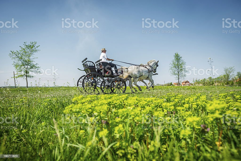Coachman in action royalty-free stock photo
