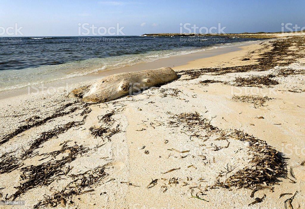 Coagheddas beach royalty-free stock photo
