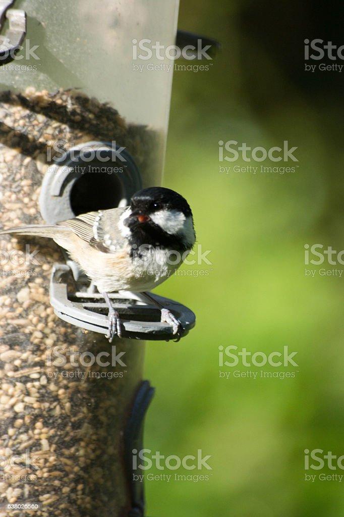Coal tit on a bird feeder stock photo