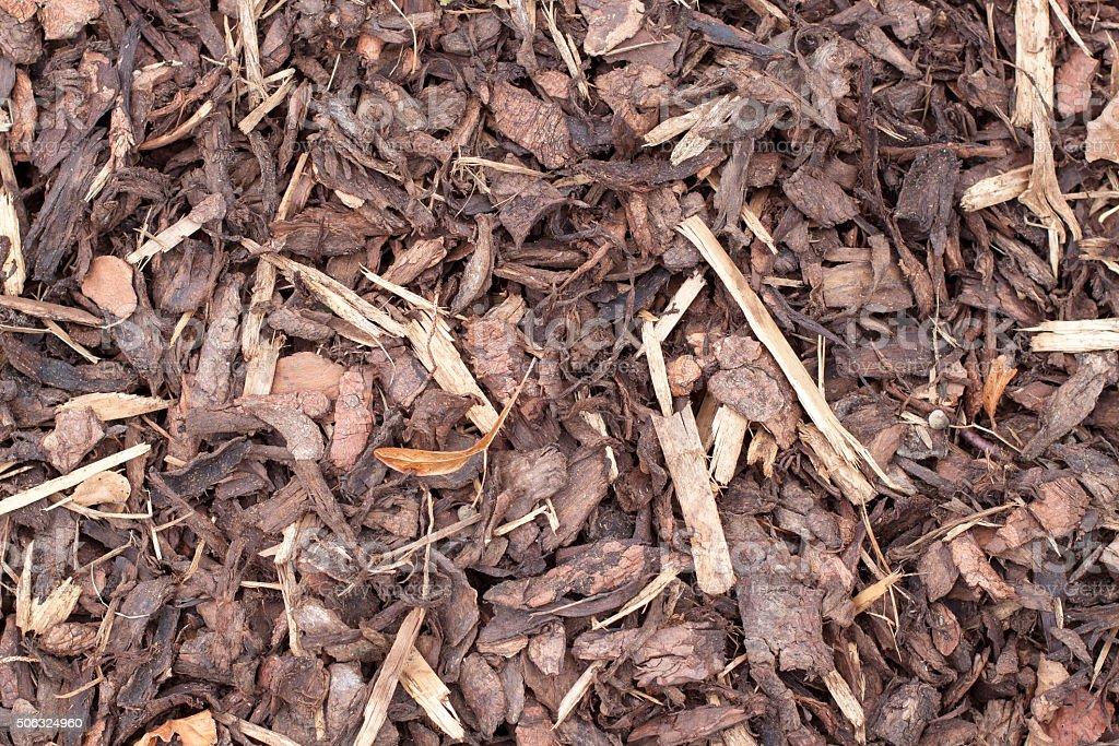 Coarse bark stock photo
