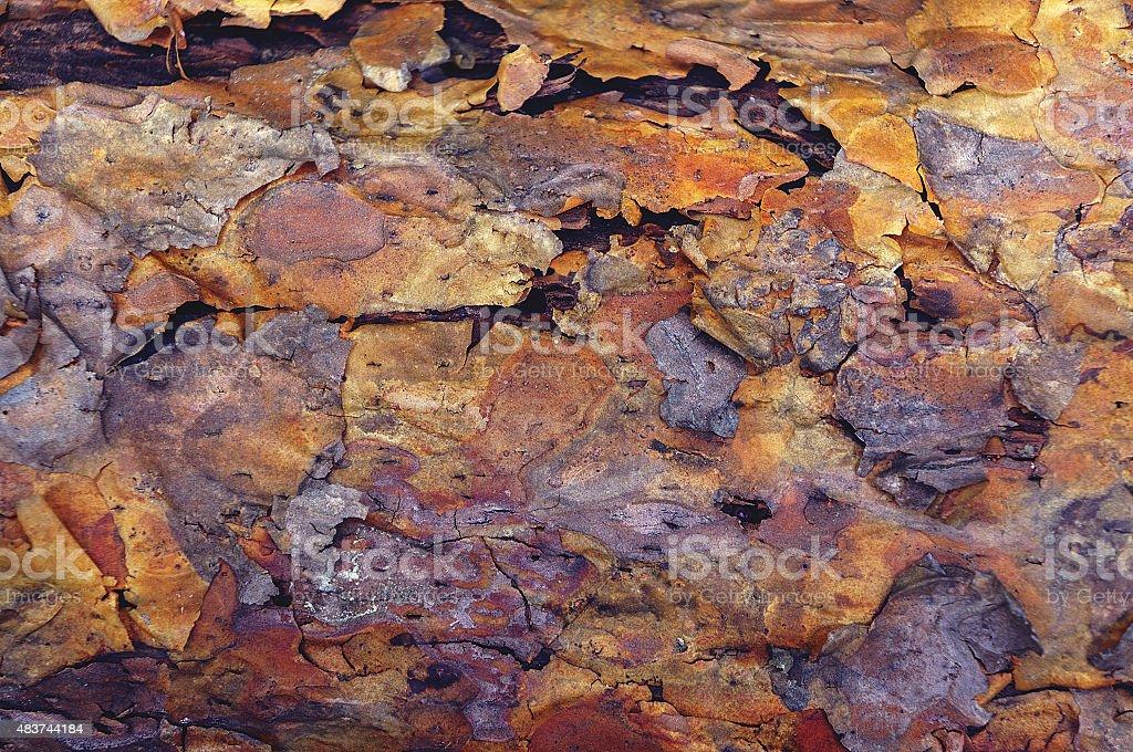 Coarse blotched bark of old pine tree stock photo