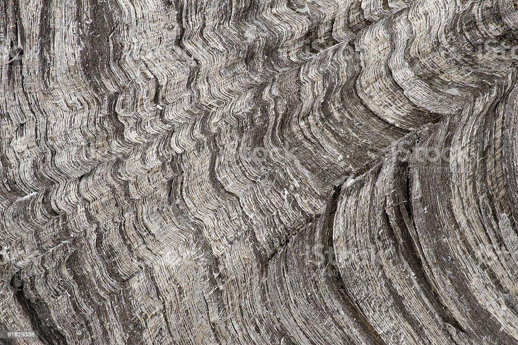 Coarse wood grain royalty-free stock photo