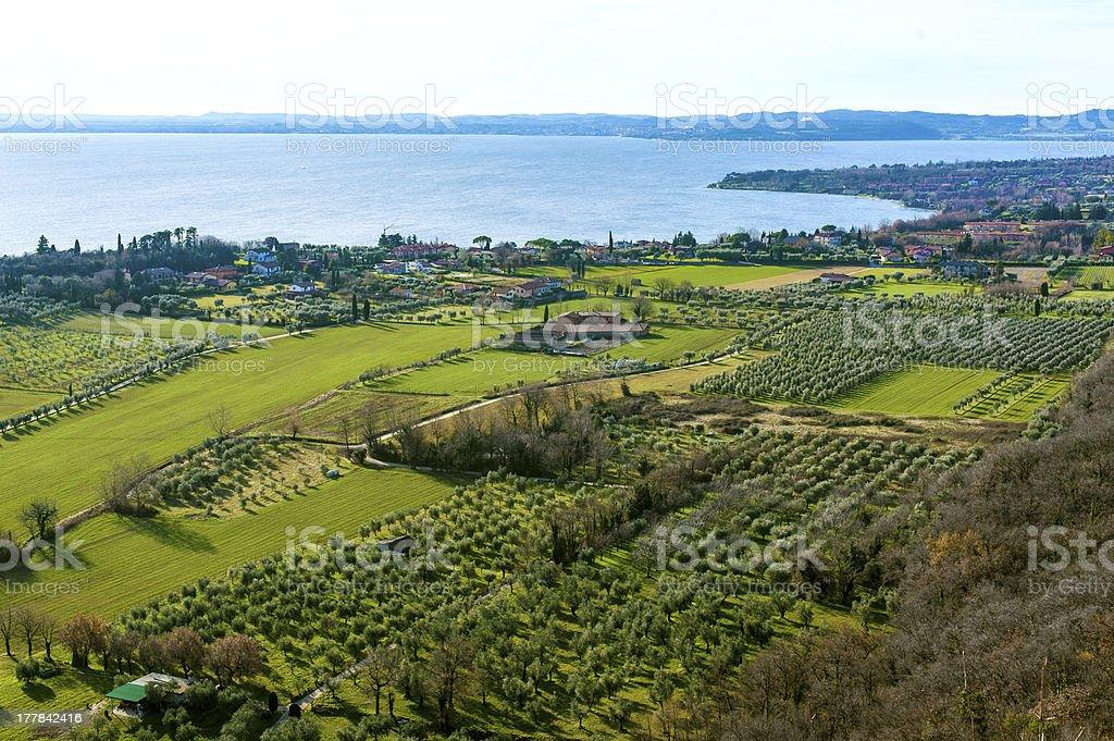 coast of garda lake, desencano, italy (olives fields) royalty-free stock photo