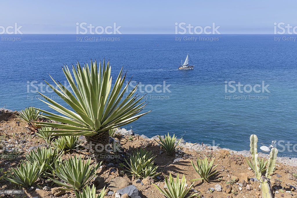 Coast of Madeira with palm tree and sailing ship stock photo