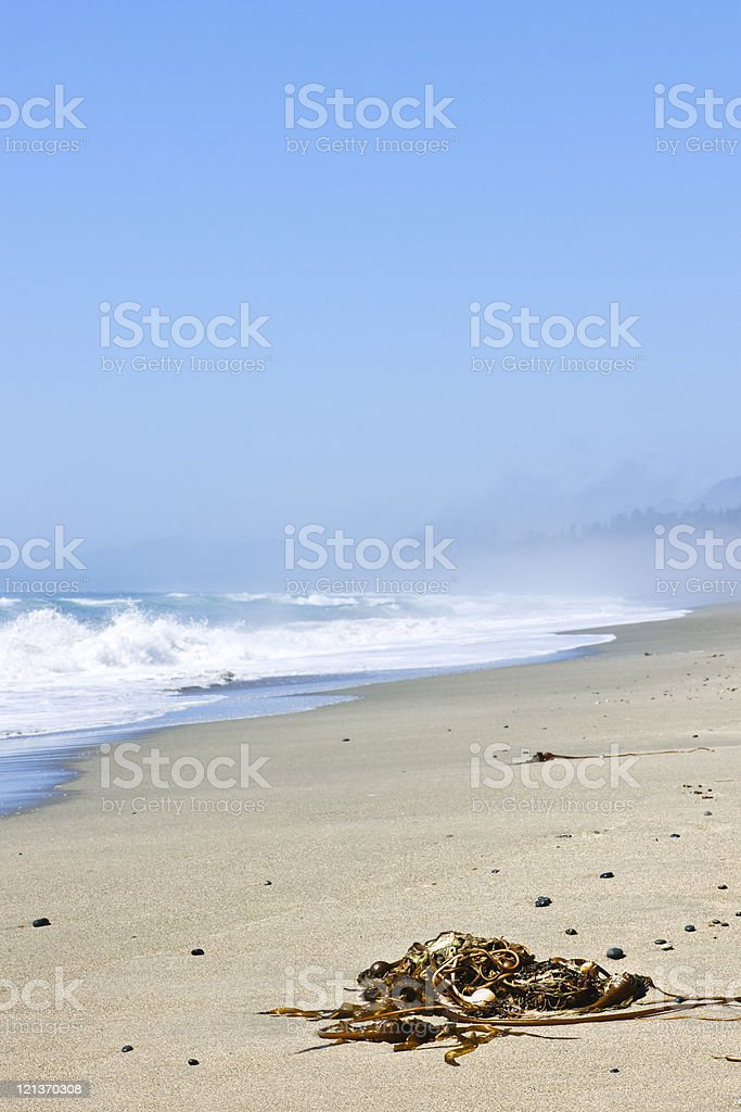Coast of Pacific ocean in Canada stock photo