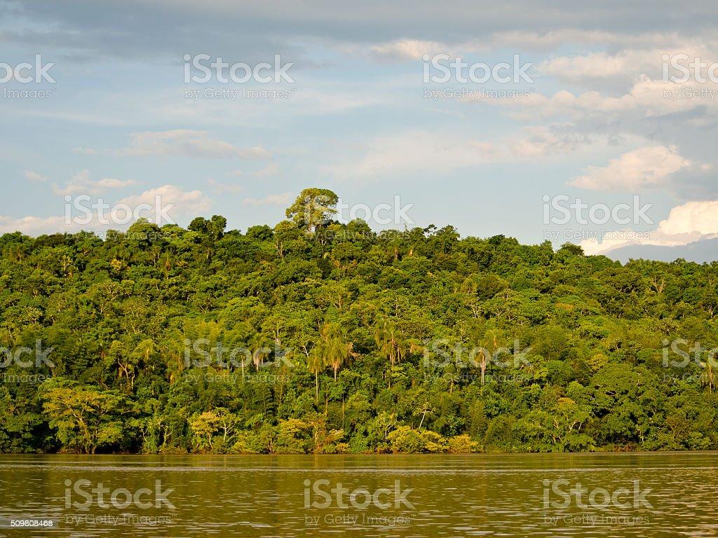 Coast of Parana River stock photo