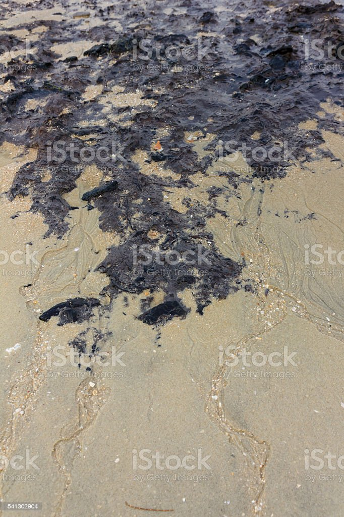 Coastal areas are filled with mud stock photo