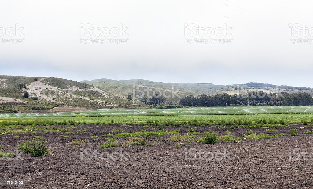 Coastal Farm royalty-free stock photo