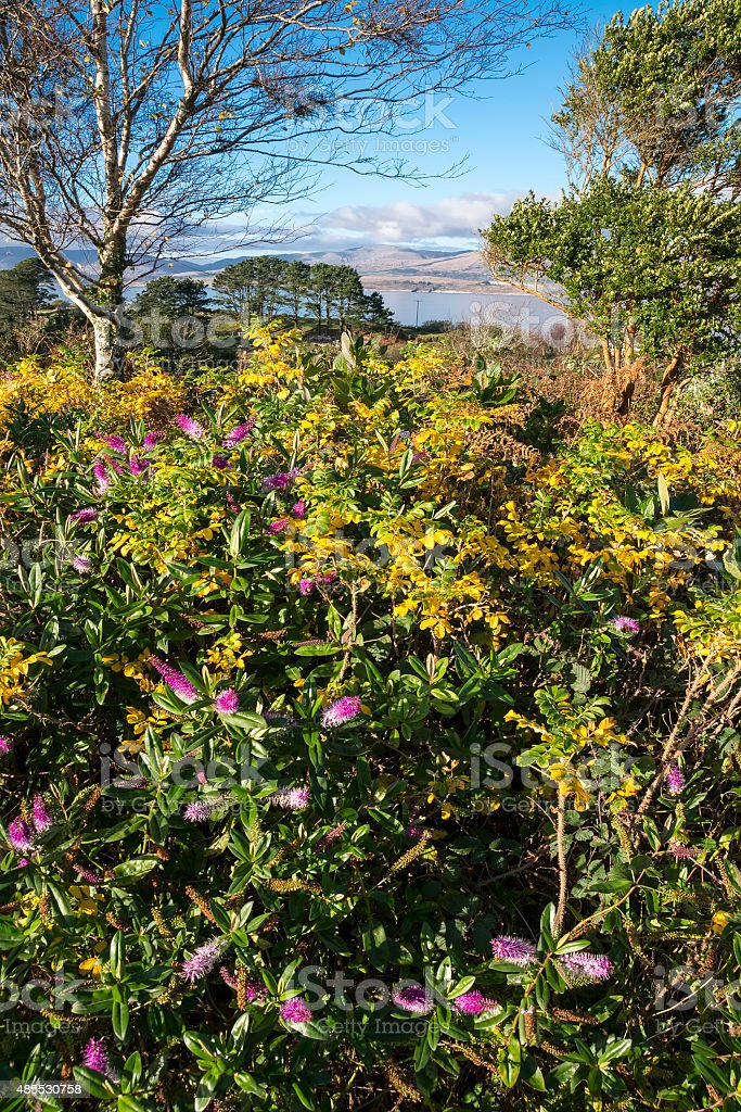 Coastal Garden stock photo