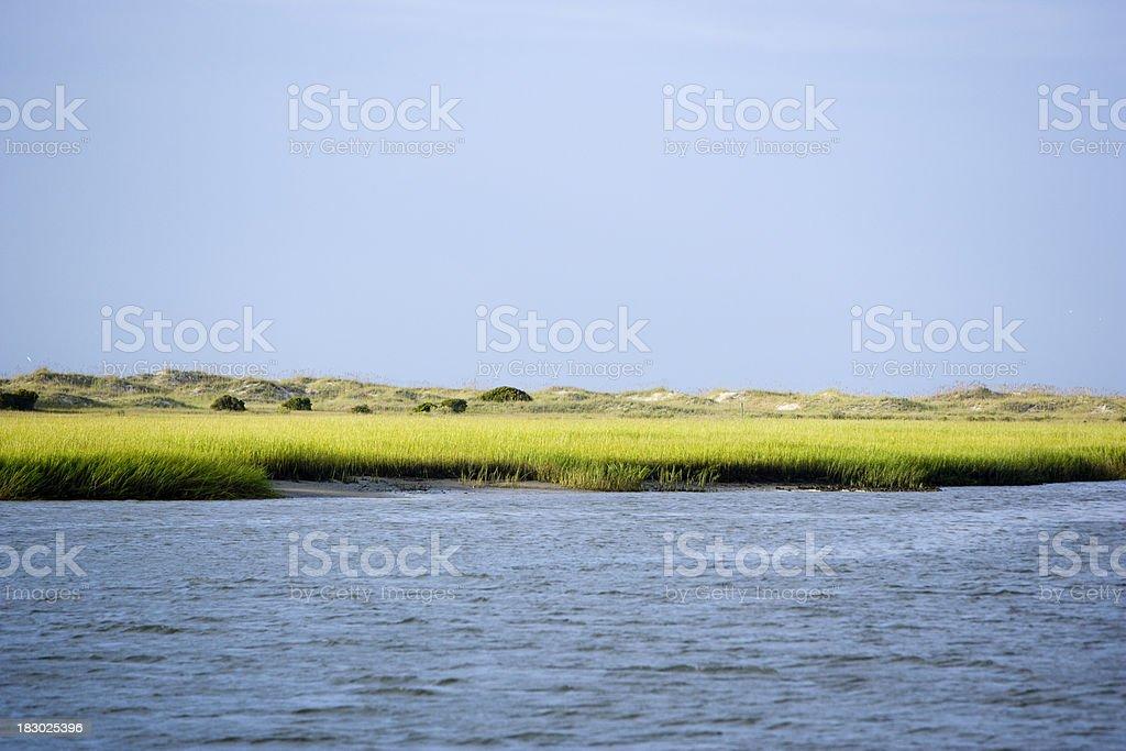 Coastal Green Marsh Grass royalty-free stock photo