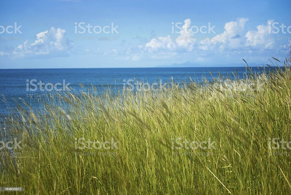 coastal landscape with tall grass and horizon royalty-free stock photo
