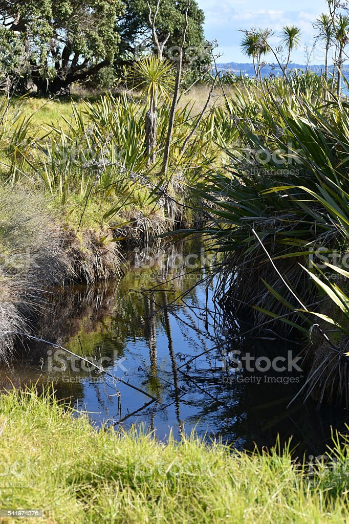 Coastal marches in New Zealand stock photo