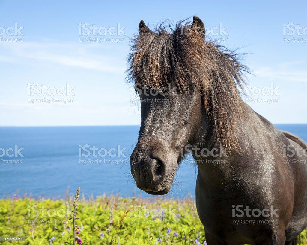 Coastal Pony photo libre de droits