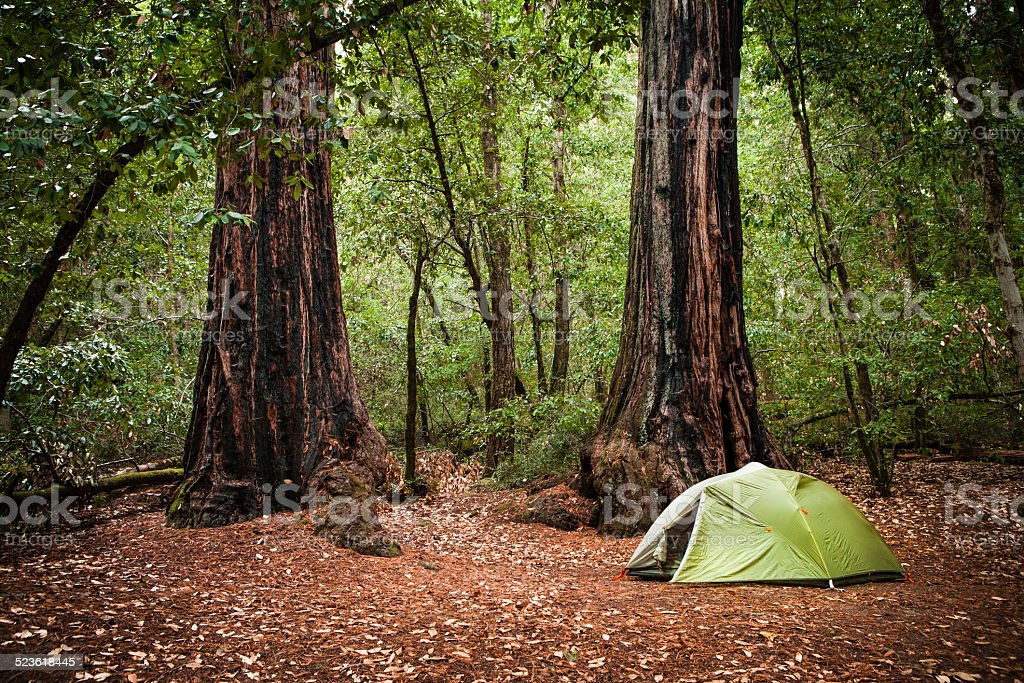 Coastal Redwood Campsite, Big Basin Redwoods State Park stock photo