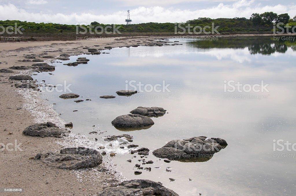 Coastal Stromatolites stock photo
